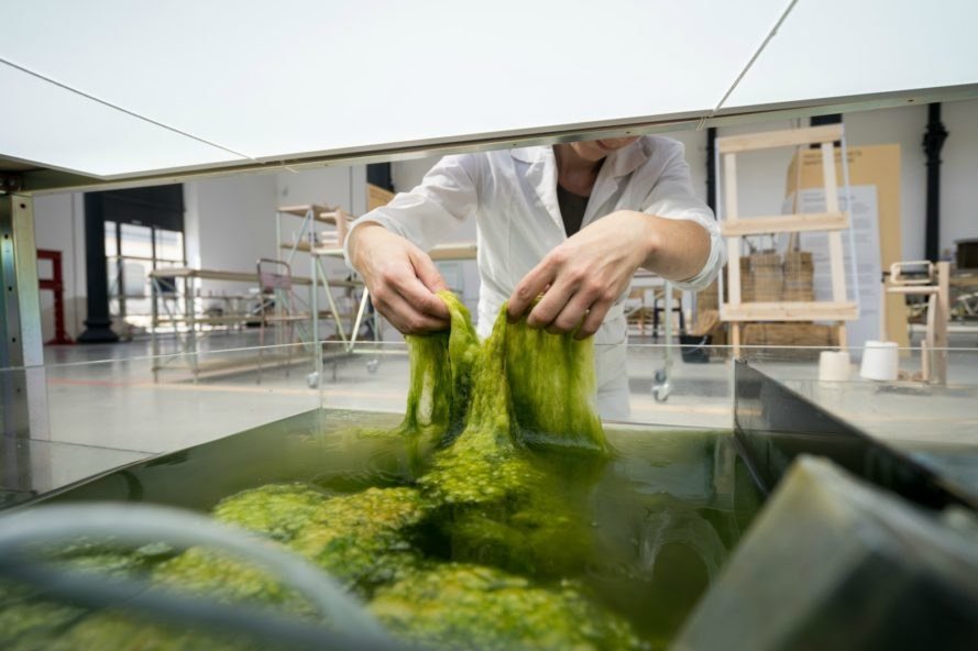 Eric Klarenbeek, Maartje Dros, Algae biopolymer, 3d printing, 3d printed materials, aquatic plants, algae products, climate changes, single use plastics, eco products, green design, 3d printed materials, eco materials made out of algae, algae conversion, algae materials, mycelium products, sustainable design