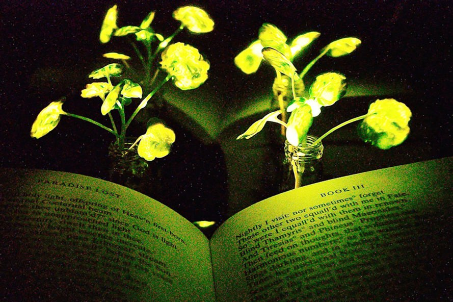 Massachusetts Institute of Technology, MIT, glowing plant, glowing plants, light, book, plant, plants