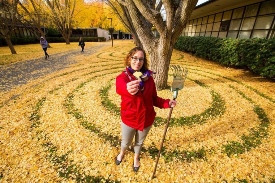 Joanna Hendrick, gingko trees, gingko leafs, gingko leaf art, sacramento state university, leaf art, nature-based art, fall leaves, art installation, raking leafs, university art, leaf design,