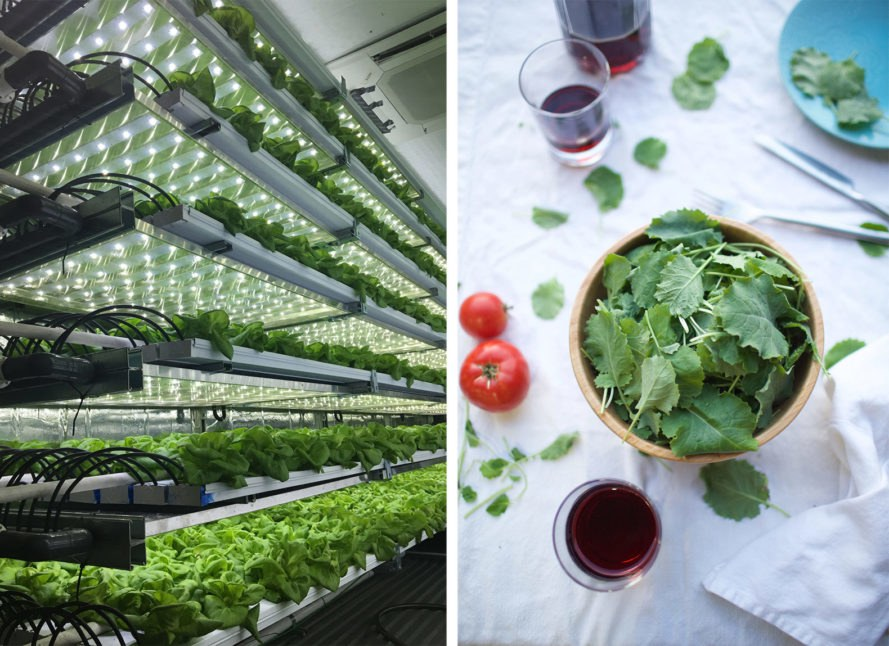 Local Roots, greens, kale, lettuce, produce, vertical farm, vertical farming