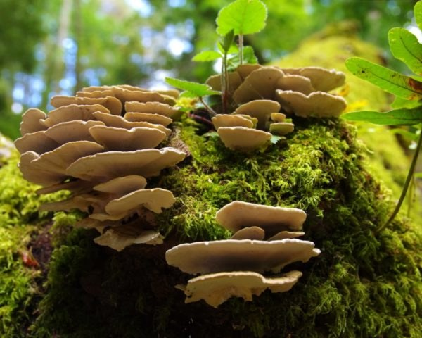 mushrooms tree, mushrooms forest, fungus forest, fungus tree
