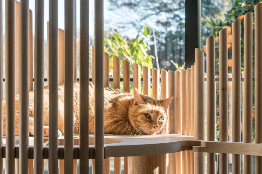 Neko Cat Tree by Yoh Komiyama, Yoh Komiyama and RINN, Neko Cat Tree by RINN, modernist pet furniture, modernist cat tree, modernist cat architecture, contemporary cat furnishings,