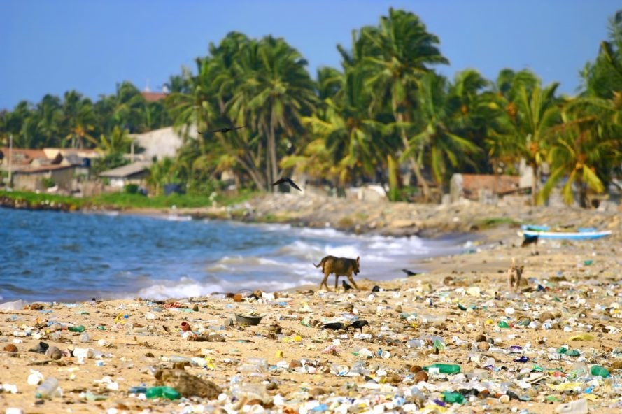 plastic beach, plastic waste, plastic pollution beach, plastic ocean, plastic pollution ocean, plastic pollution dog