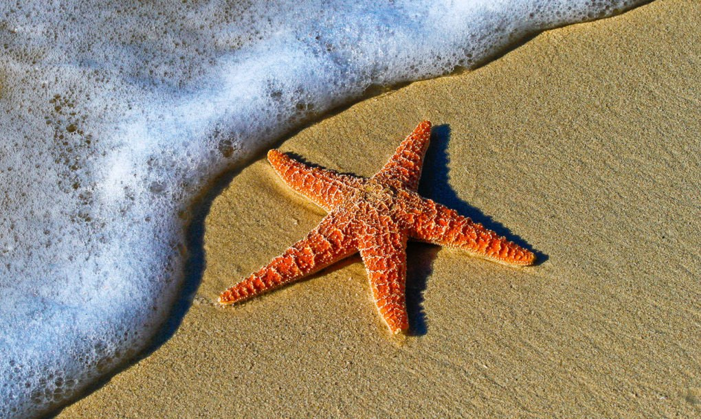 pacific starfish bounce back after massive die off inhabitat