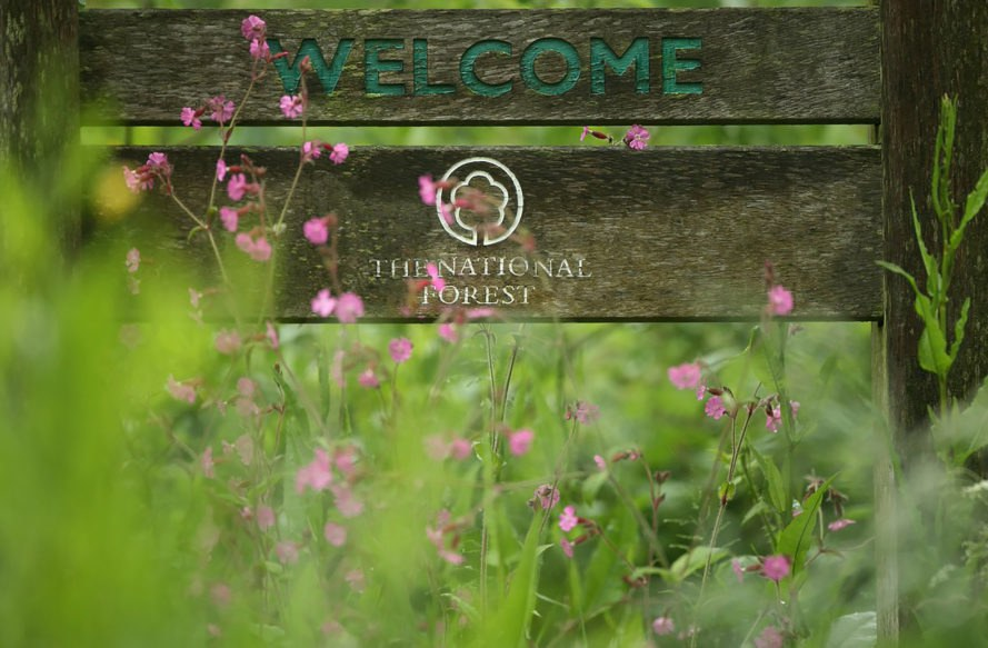 National Forest Company, National Forest, sign, welcome sign, nature, plants, greenery