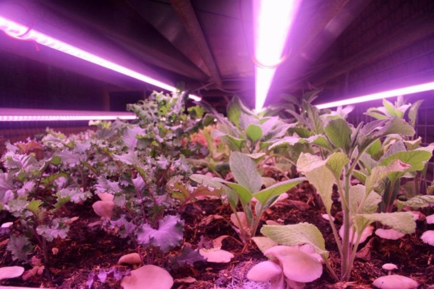 urban farm La Caverne, underground farm La Caverne, growing greens La Caverne, hydroponic growing Cycloponics