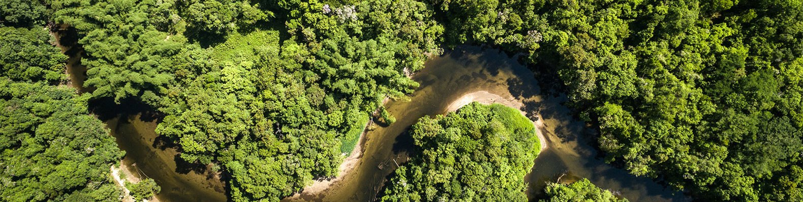 Amazon, Brazil, rainforest, forest, trees, nature, river