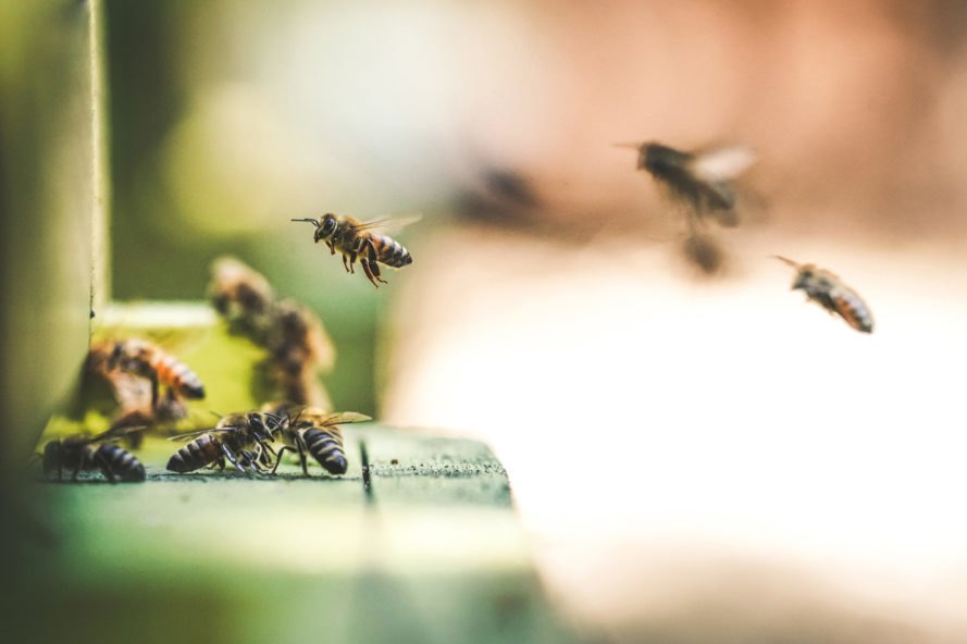 Bee, bees, honey farm, honey, insects, flying, nature