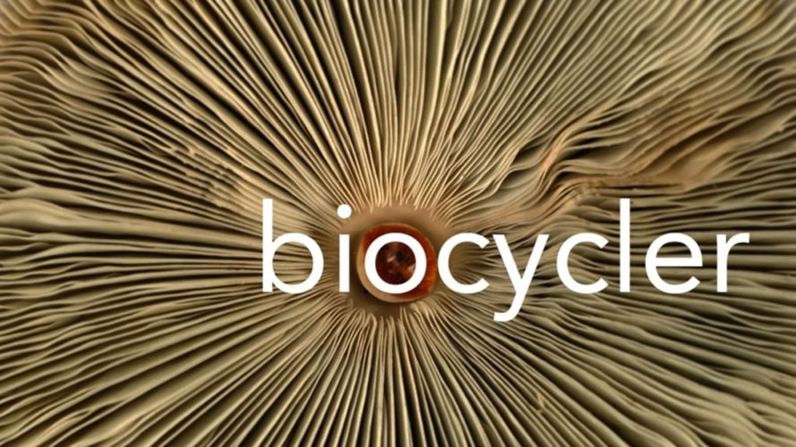 Biocycler, redhouse studio, recycled materials, recycled buildings, recycled building materials, biomaterials, fungus biomaterials