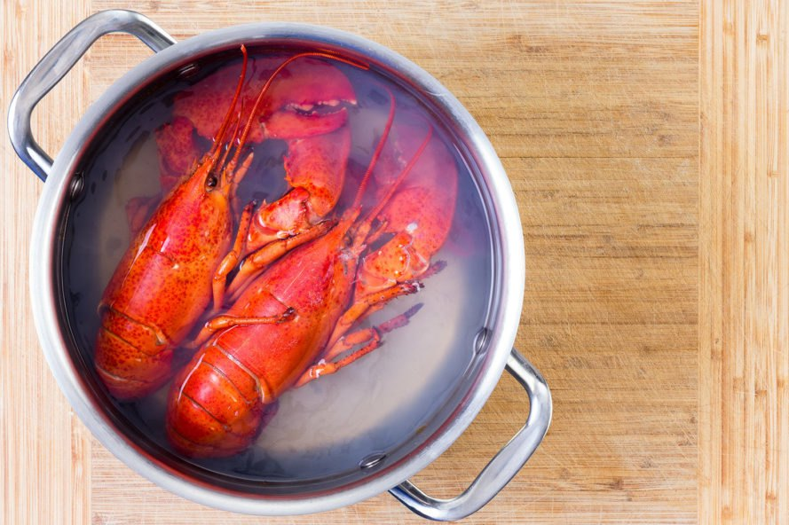 Lobsters, cooking, boiling, pot, food, lobster