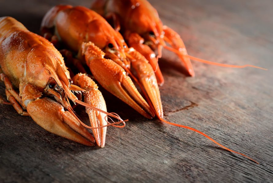 Switzerland just made it illegal to boil live lobsters