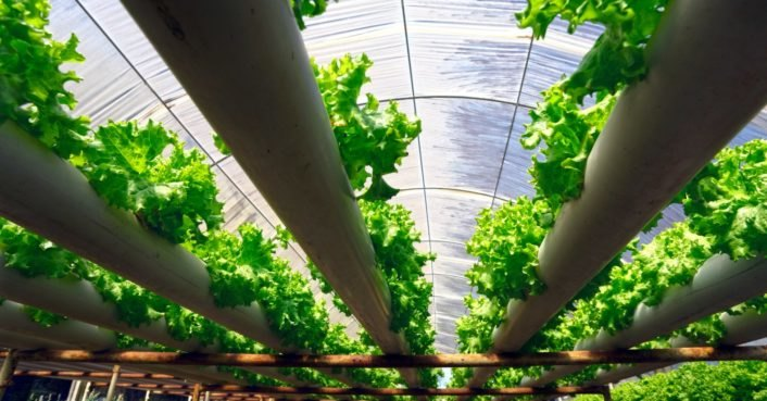 6 Places Where Soil Less Farming Is Revolutionizing How We