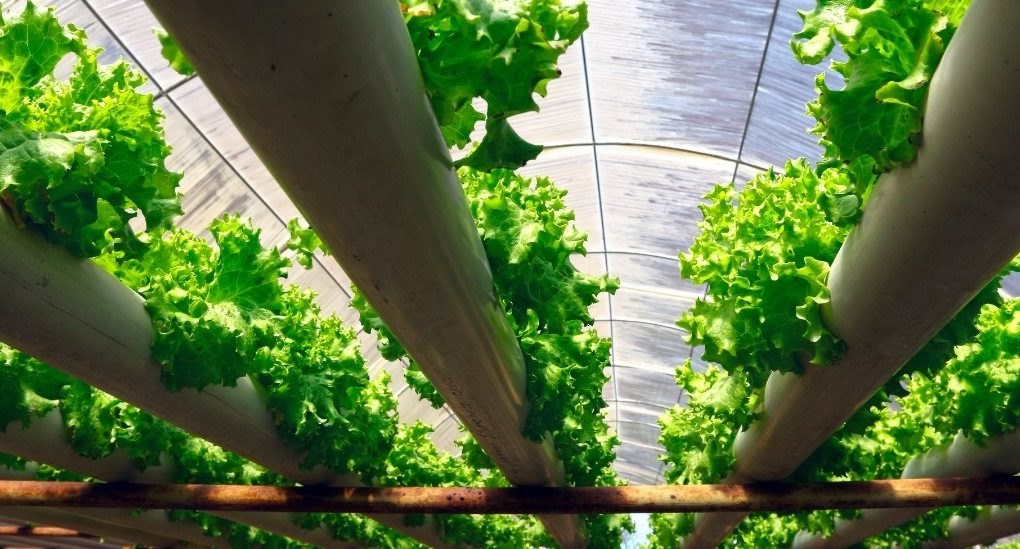 6 Eco Friendly Diy Homes Built For 20k Or Less: 6 Places Where Soil-less Farming Is Revolutionizing How We
