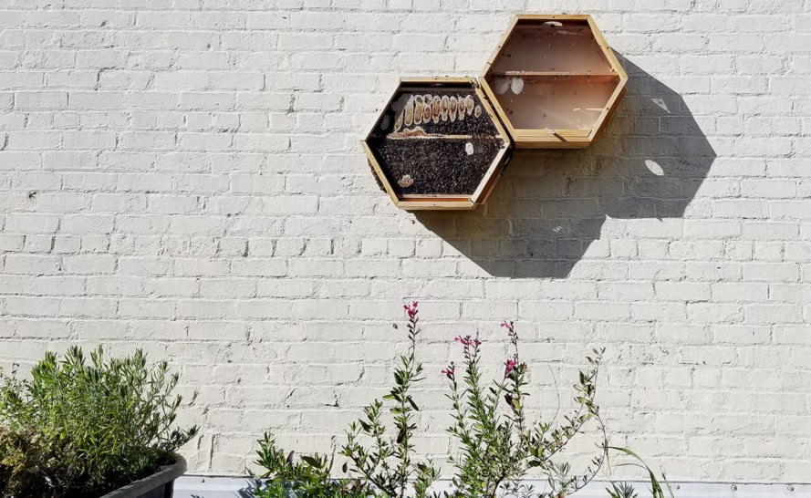 BEEcosystem, observation hive, indoor beehives, BEEcosystem Ambassador Program, indoor outdoor hive, hexagonal beehive, modular beehives, green beehive design