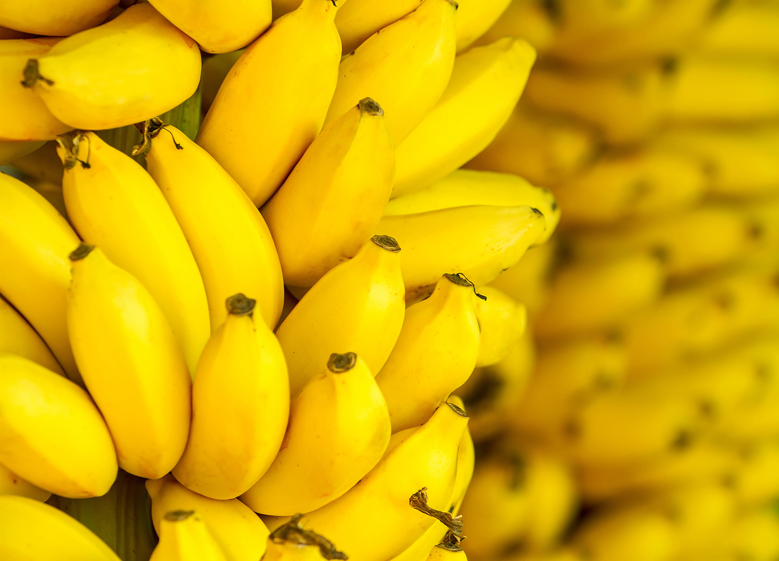 Japanese researchers create tasty new banana with a thin edible peel