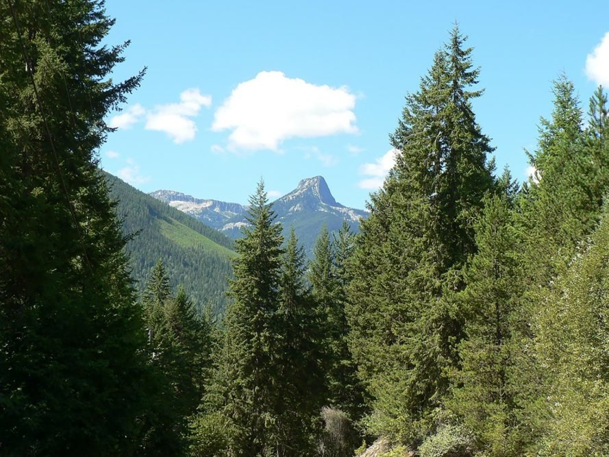Frog Mountain, Slocan Valley, British Columbia, Sinixt, Sinixt Nation, mountain, trees