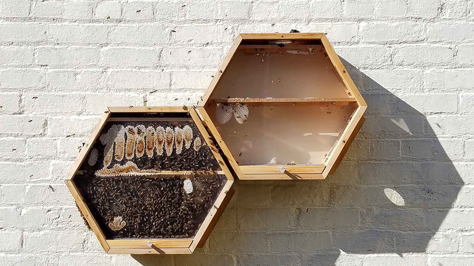 BEEcosystem observation hives can be installed inside or outdoors