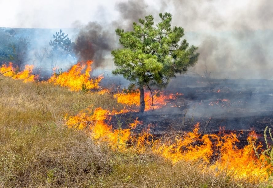fire, wildfire, forest fire, drought, Ukraine