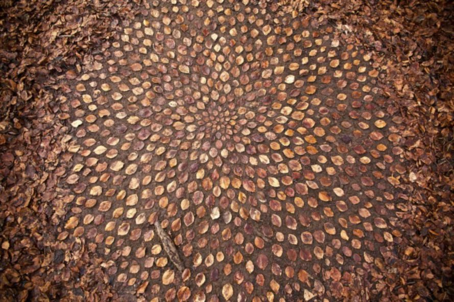 James Brunt, nature-inspired art, leaf art, rock art, natural artists, british artists, beach art, forest art, tree art, cairns, leaf mandalas, leaf art, nature-based art, fall leaves, leaf design, leaf spirals, twig art,