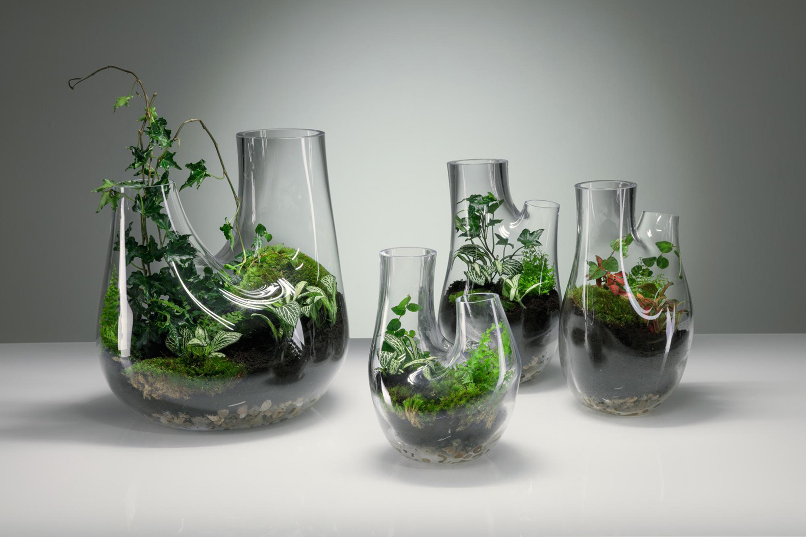 Build You Own Home Terrarium With Tom Dixon S Gorgeous Glass Vessels