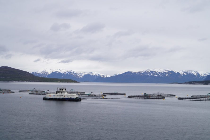 Norway, Norwegian Sea, salmon farming, fish farming, fish farm, salmon farm, salmon, sea