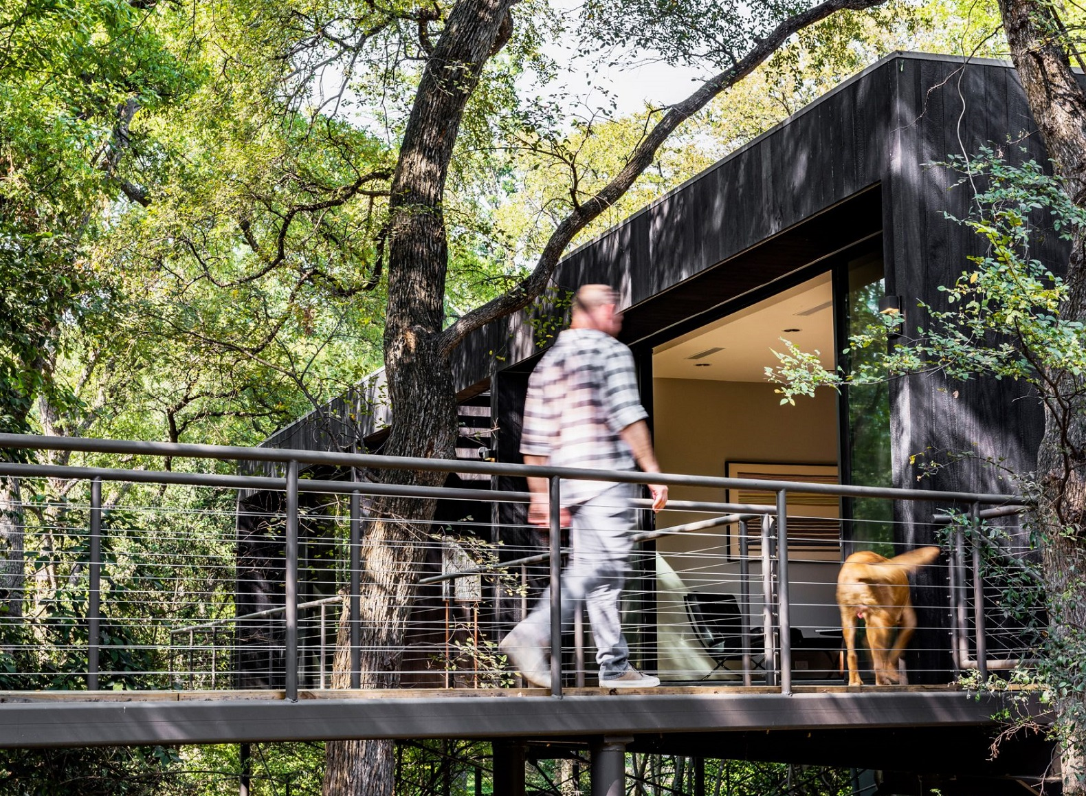 The Treebox is an amazing modern home set high up in the treetops