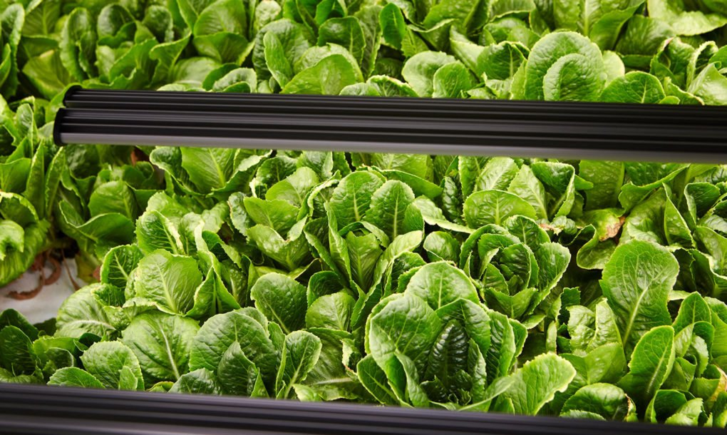 """The """"most technologically-sophisticated commercial indoor farm in the world"""" will grow 30X more produce"""