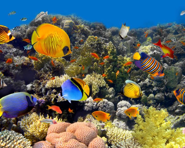 coral reef, coral, reef, fish, underwater, sunlight