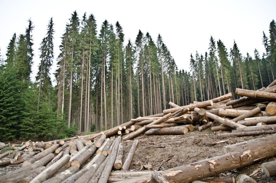 Trees, tree, log, logs, deforestation, logging, illegal logging
