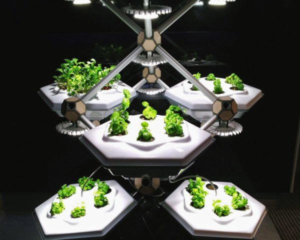 Hexagro Urban Farming, Hexagro, Living Farming Tree, indoor farm, indoor garden, vertical garden, plants, Accor Hotel