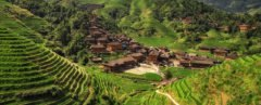 Farming, agriculture, rice field, rice, Vietnam, harvest, terrace