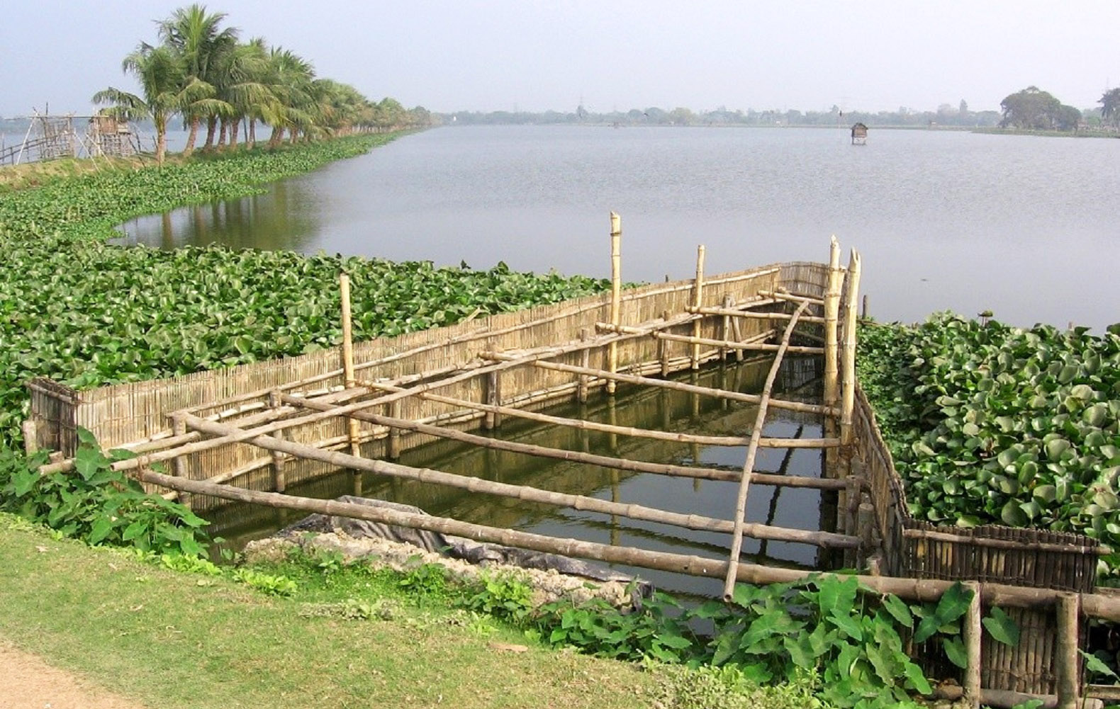 Natural wetland in India filters 198 million gallons of wastewater a day with zero chemicals
