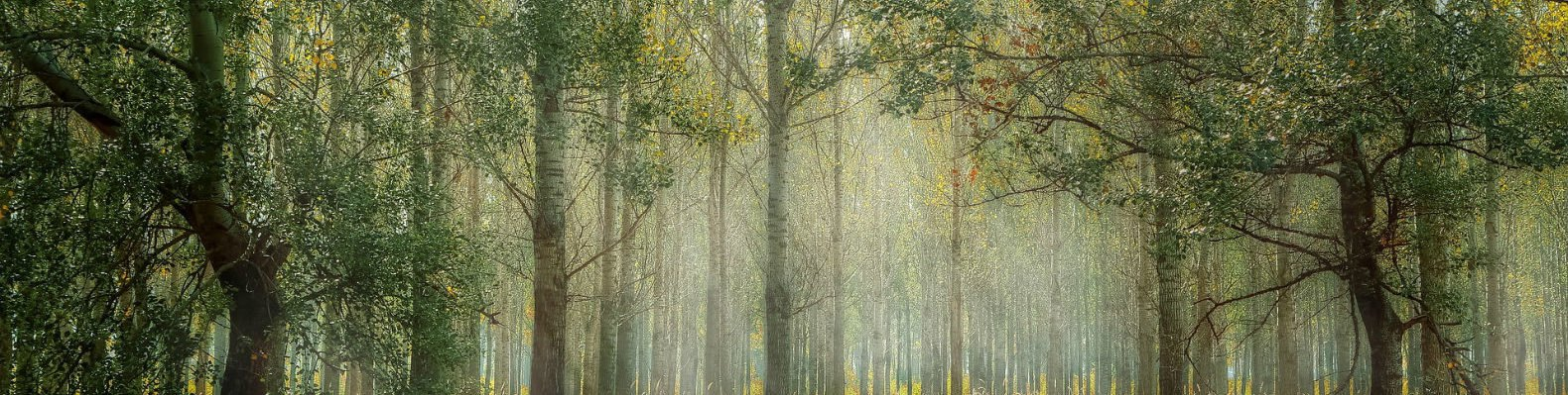 benefits of forest bathing, walking in nature, mental health benefits of forest bathing, health benefits of forest bathing, where to forest bathe, Japanese forest bathing