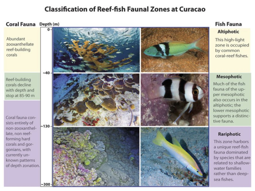 Rariphotic zone, aphotic zone, ocean zones, ocean life, new ocean zone, ocean research, new fish, newly discovered fish, newly discovered species, reefs, reef ecosystems, mesophotic zone, ocean research, Carole Baldwin, Smithsonia, Deep Reef Observation Project