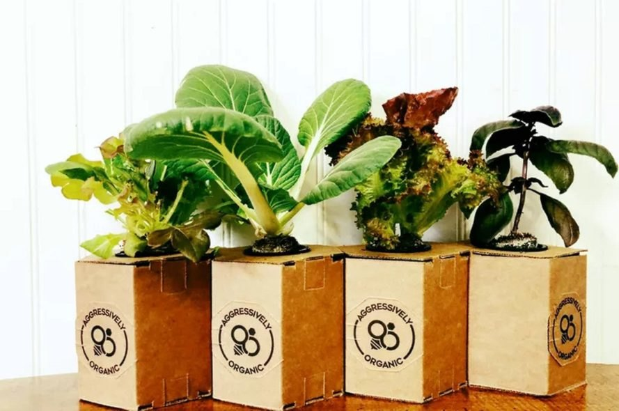 Aggressively Organic's Micro Growth Chamber Systems allow people to grow produce indoors at home