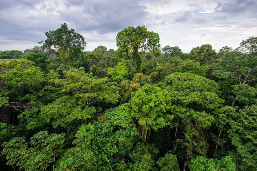 Amazon, Amazon Rainforest, Amazon River