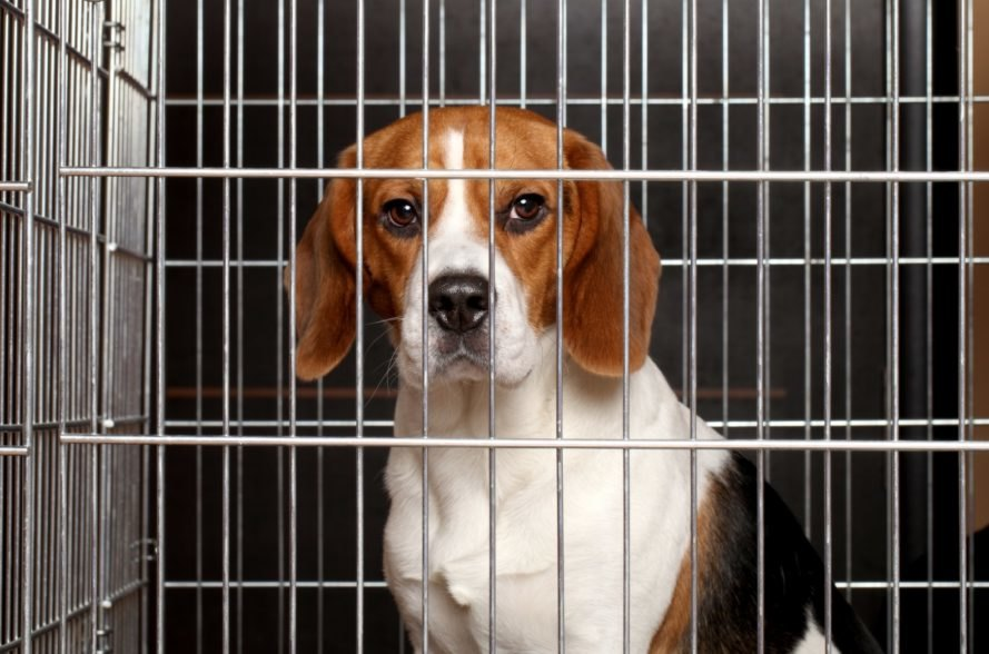 Maryland just banned the sale of puppies and kittens in pet