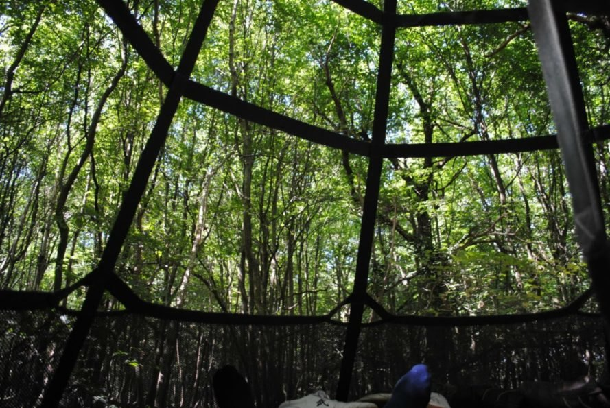 View from the inside of the Sky-Pod Hanging Tent