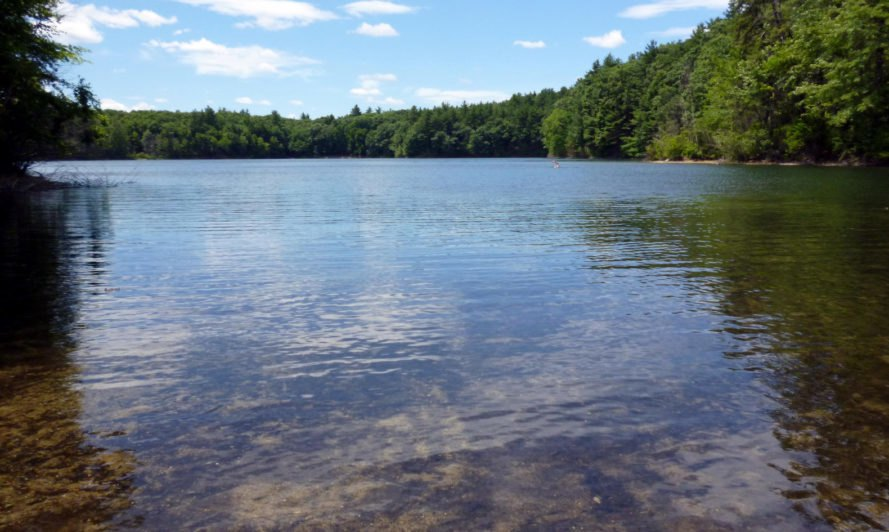 Walden Pond in late June, with vibrant green trees lining the pond and a bright blue sky with some clouds.