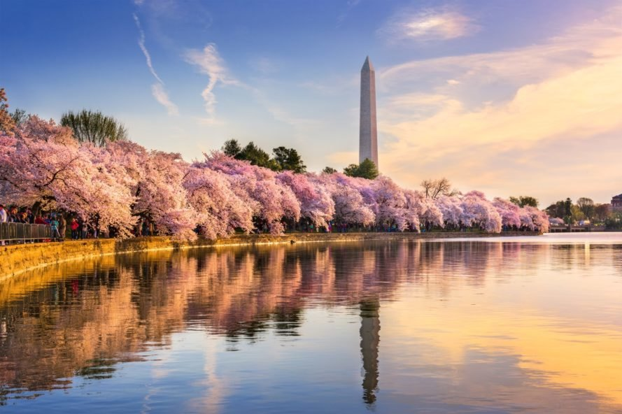 Washington DC, Tidal Basin, Washington Monument, spring, blossoms, cherry blossoms