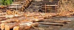 Timber logs stacked in piles