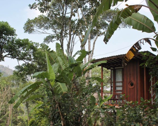 Outside view of cabin surrounded by lush greenery
