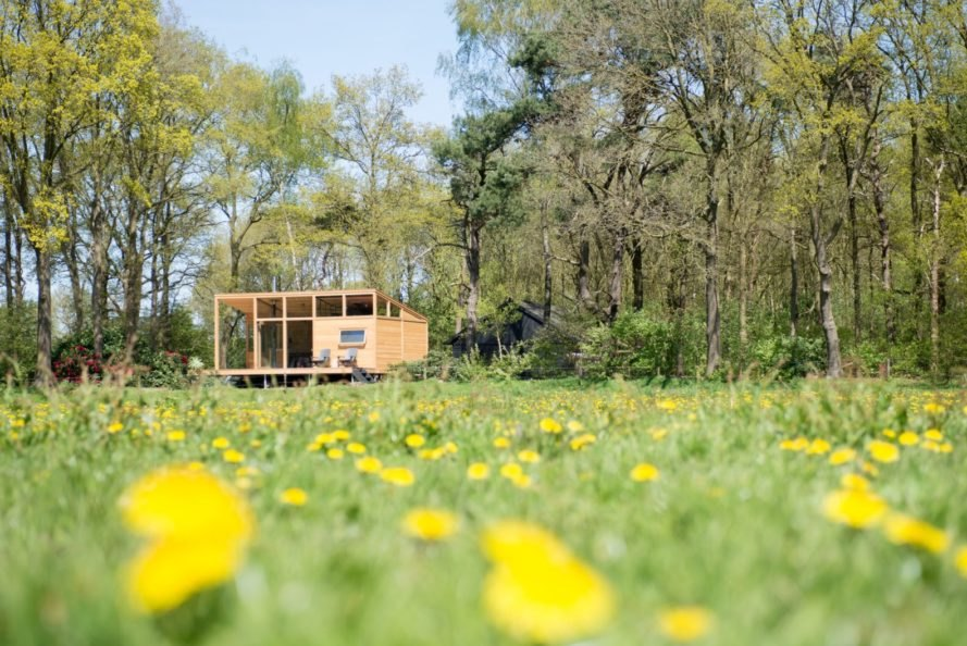wooden cabin in field of wild flowers