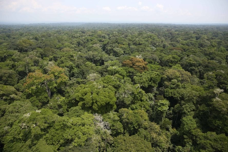An aerial photograph of the Ituri Rainforest in the Democratic Republic of Congo