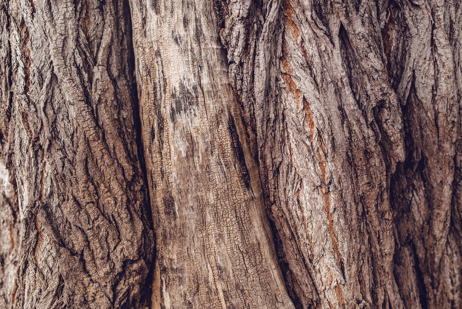 """Scientists just created a new """"super wood"""" that's stronger than steel"""