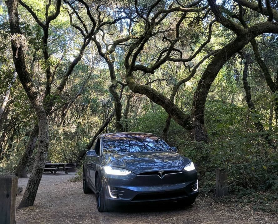 Tesla under trees at Henry Cowell Redwoods State Park