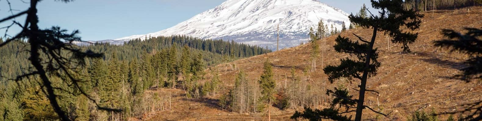 A deforested area in front of a snowy mountain