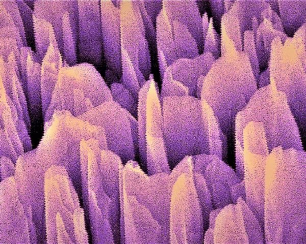 Microscopic image of gallium nitride towers in artificial photosynthesis device