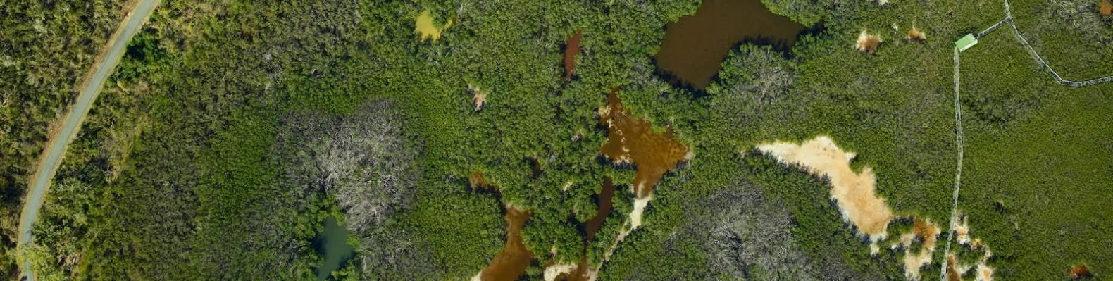 An aerial image of damaged forests in Puerto Rico after Hurricane Maria