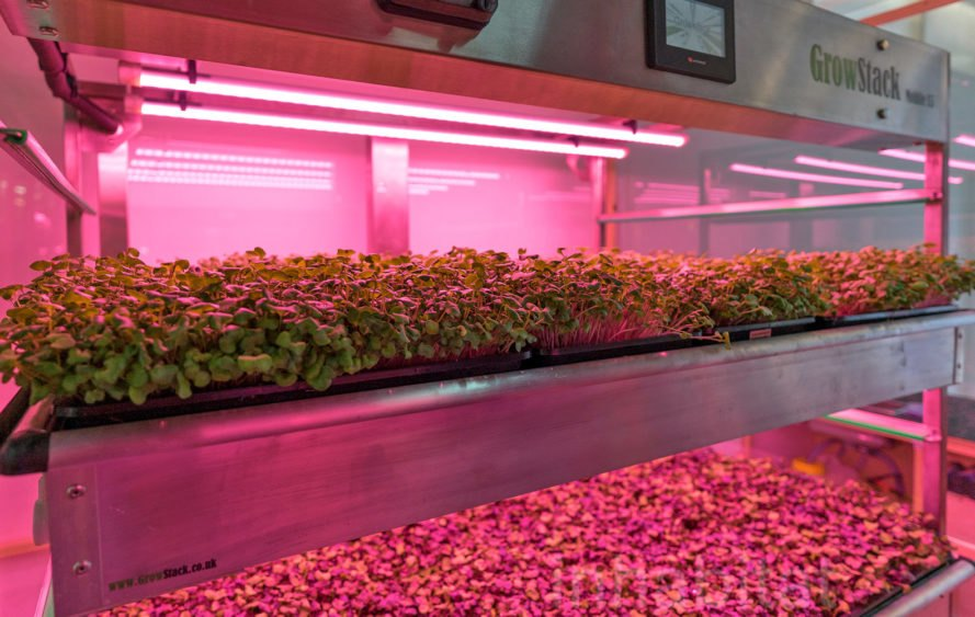 Can vertical farming feed the world and change the agriculture industry?